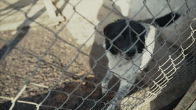 Un cane triste nella sua gabbia ad un riparo animale che aspetta per essere adottato stock footage