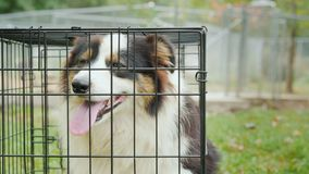 Un cane triste si siede in una gabbia Adozione del concetto dell'animale domestico archivi video