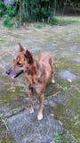 Un cane in un giardino Fotografia Stock