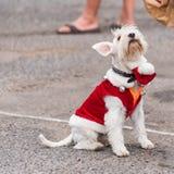Un cane in un vestito ad una mostra di retro automobili Volkswagen, Agde, Francia Copi lo spazio per testo fotografie stock libere da diritti