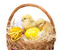 Un canestro con le uova di Pasqua ed i polli Fotografia Stock