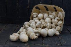 Un canestro dei funghi bianchi sparsi Funghi bianchi su un fondo nero Funghi prataioli Fotografia Stock