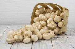 Un canestro dei funghi bianchi sparsi Funghi bianchi su una priorità bassa bianca Funghi prataioli Fotografia Stock