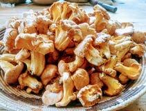 Un canestro dei funghi selvaggi deliziosi Immagine Stock Libera da Diritti