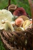 Un canestro pieno dei funghi della foresta di estate dei toni pastelli differenti contro lo sfondo di una radura della foresta Immagini Stock Libere da Diritti