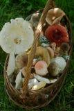 Un canestro pieno dei funghi della foresta di estate dei toni pastelli differenti contro lo sfondo di una radura della foresta Fotografia Stock