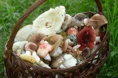 Un canestro pieno dei funghi della foresta di estate dei toni pastelli differenti contro lo sfondo di una radura della foresta Fotografie Stock