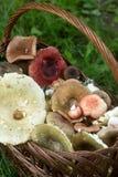 Un canestro pieno dei funghi della foresta di estate dei toni pastelli differenti contro lo sfondo di una radura della foresta Immagine Stock