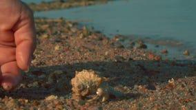 Un cangrejo de ermitaño corre de la palma a la arena metrajes