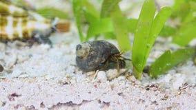 Un cangrejo de ermitaño en un acuario almacen de video