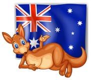 Un canguro delante de la bandera australiana Imagen de archivo libre de regalías