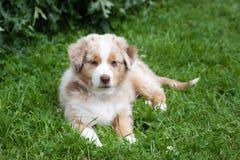Un canino in ritratto Fotografia Stock
