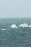 Un canot automobile sur la Manche images libres de droits