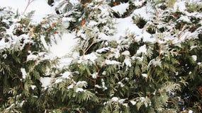 Un cappuccio di neve sui cespugli Immagine Stock Libera da Diritti
