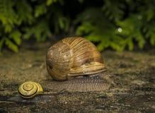 Un caracol en una piedra Imagen de archivo libre de regalías