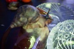 Un caracol gigante en un pote de arcilla mira un florero cristalino foto de archivo libre de regalías
