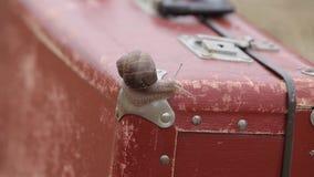 Un caracol grande en una maleta roja en un campo del verano con mijo almacen de video
