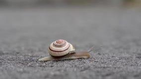 Un caracol que se arrastra lentamente a lo largo de una carretera de asfalto almacen de metraje de vídeo