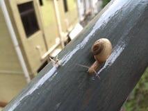 Un caracol y un insecto en barras de hierro imagenes de archivo
