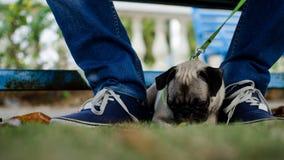 Un carlino o un cane che si siede in un giardino Fotografia Stock Libera da Diritti