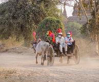 Un carretto del bue sulla strada rurale in Bagan, Myanmar Fotografia Stock