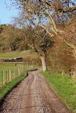 Un carril inglés del país en invierno temprano con la pista Imagen de archivo