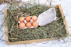Un cartone di sei uova Fotografie Stock