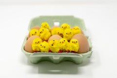 Un cartone verde che contiene la mezza dozzina eggs con 12 pulcini lanuginosi del giocattolo del ` s dei bambini sparsi sulla cim fotografia stock