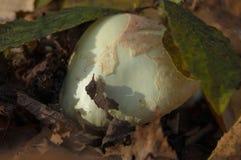 Un casquillo de la seta debajo del follaje verde Foto de archivo