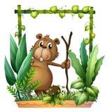 Un castoro che tiene un legno Fotografie Stock