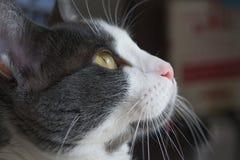 Un cat& x27 ; visage de s photographie stock libre de droits