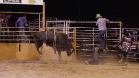 Un cavaliere del toro che guida il suo toro stock footage