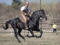Un cavaliere di Maremma toscano Fotografie Stock Libere da Diritti