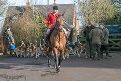Un cavaliere inglese pronto per caccia di resistenza con i segugi Fotografia Stock Libera da Diritti