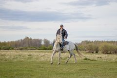 Un cavaliere su un cavallo bianco nel campo fotografie stock