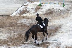 Un cavaliere su un horse Immagini Stock Libere da Diritti