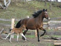 Un cavallino del puledro fotografie stock libere da diritti