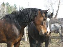 Un cavallino del puledro un giorno di estate sciolto Fotografia Stock Libera da Diritti