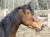 Un cavallino del puledro un giorno di estate sciolto Immagini Stock