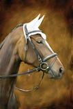 Un cavallo Fotografia Stock Libera da Diritti