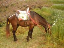Un cavallo Immagini Stock