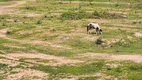 Un cavallo Fotografia Stock