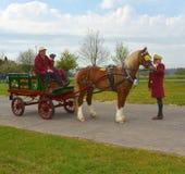 Un cavallo ai vecchi rimorchi Fotografie Stock