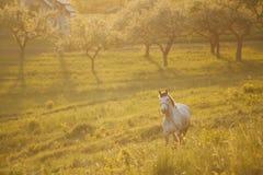 Un cavallo alla luce di tramonto fotografia stock libera da diritti