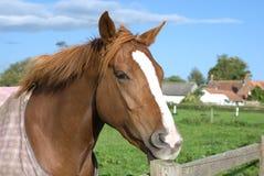 Un cavallo alla rete fissa Immagini Stock Libere da Diritti