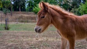 Un cavallo bello ha catturato nel ranch sotto il sole dell'estate Fotografia Stock