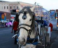 Un cavallo bianco ha condotto il trasporto con le luci notturne blu Fotografia Stock