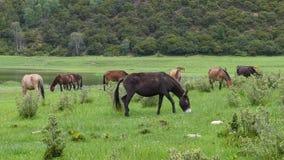 Un cavallo che mangia erba Fotografia Stock