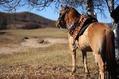 Un cavallo che sta sotto un albero Immagine Stock