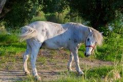 Un cavallo combatte con una mosca Immagini Stock Libere da Diritti